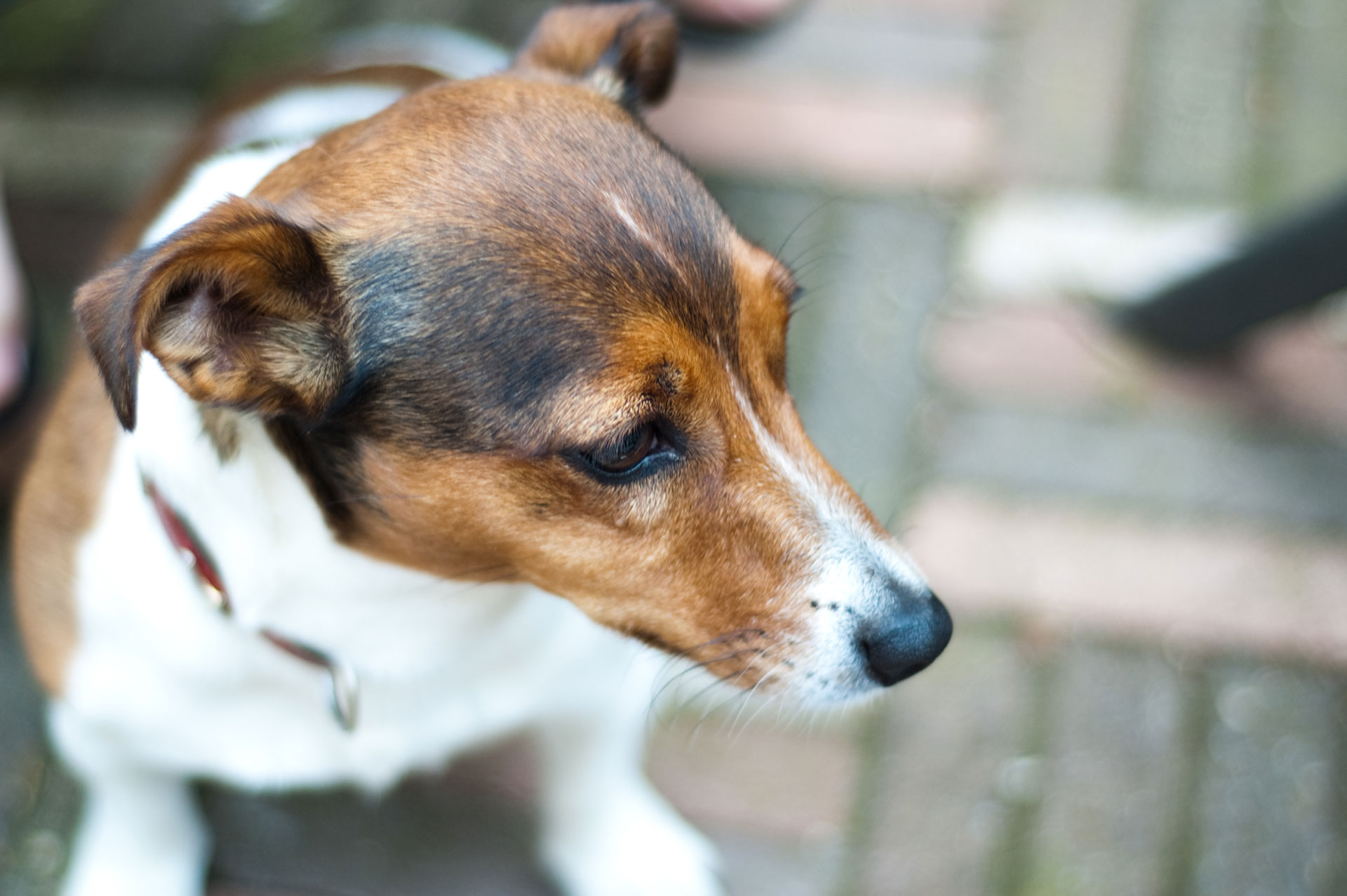 Hondenuitlaatservice Buddies